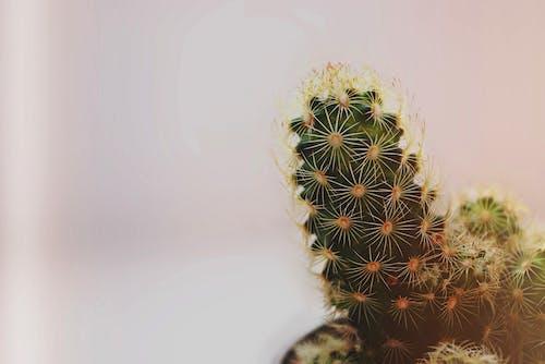 Gratis lagerfoto af 4k-baggrund, close-up, HD-baggrund, kaktus