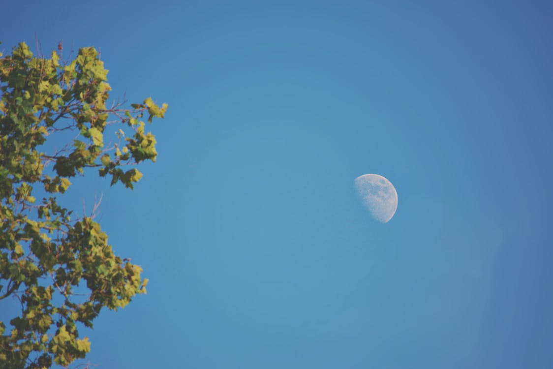 Green Leafed Tree and Moon