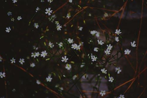 HD 바탕화면, 꽃, 꽃 바탕화면, 꽃이 피는의 무료 스톡 사진
