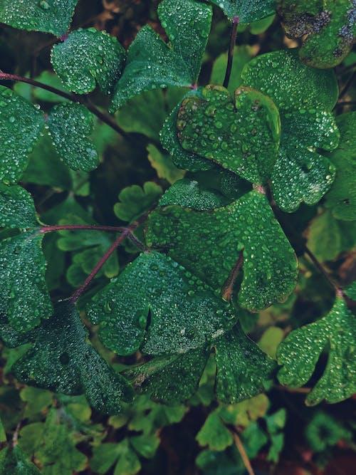 bitki, buğulu, bulanıklık, büyüme içeren Ücretsiz stok fotoğraf
