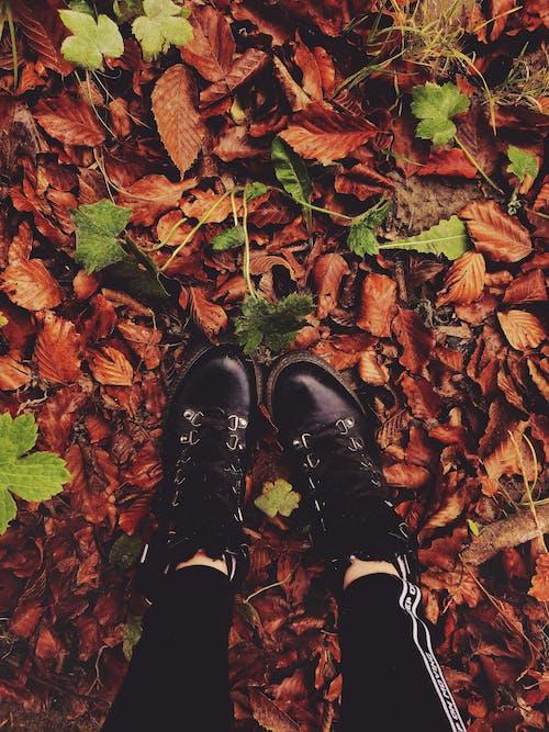 Darmowe zdjęcie z galerii z obuwie, osoba, suche liście