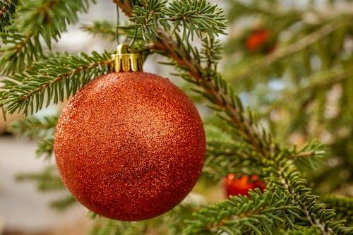 Immagine gratuita di appeso, decorazione natalizia, natale, palla