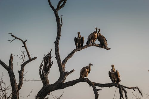Free stock photo of africa, early morning, safari, vulture
