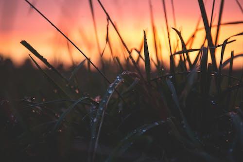 Fotos de stock gratuitas de agua, amanecer, césped, efecto desenfocado