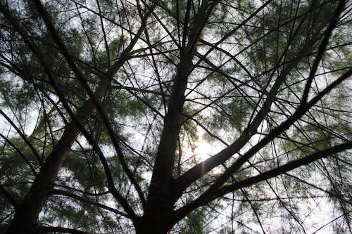 Foto profissional grátis de árvore, filiais, perspectiva