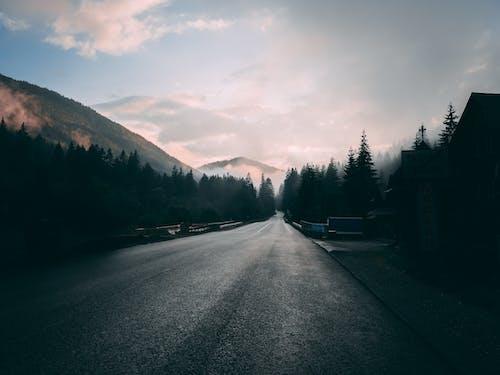 Imagine de stoc gratuită din asfalt, ceață, cețos, drum