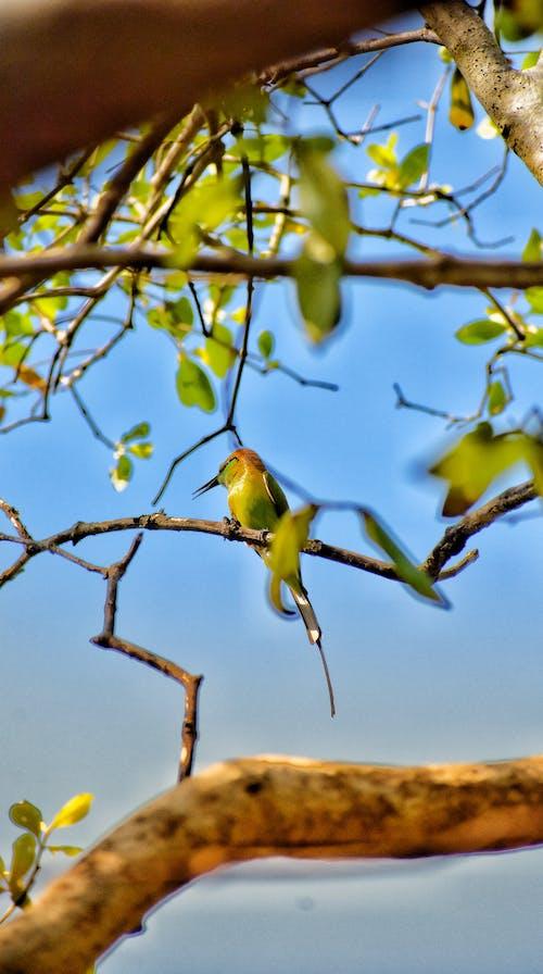 Foto stok gratis burung buas, fotografi binatang liar