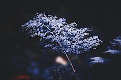 Immagine gratuita di albero, ambiente, colori, leggero