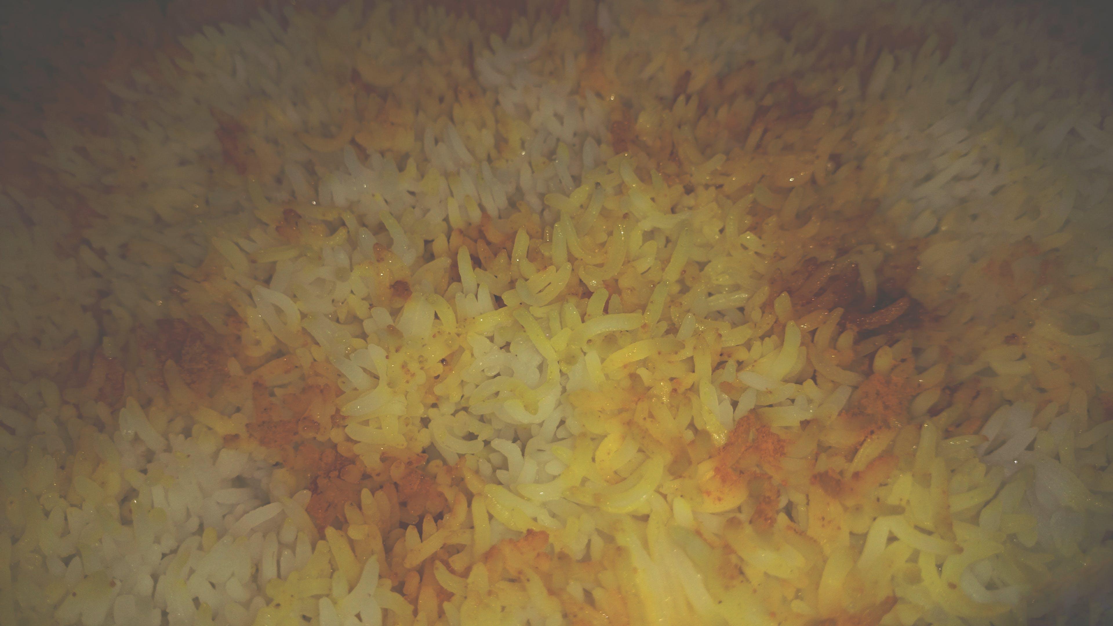 Free stock photo of eat, food, rice, tannin