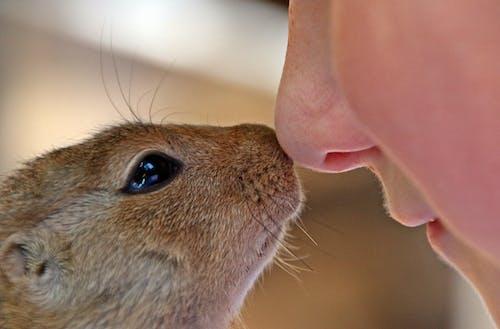 paraxerus, 信任, 動物, 可愛 的 免費圖庫相片