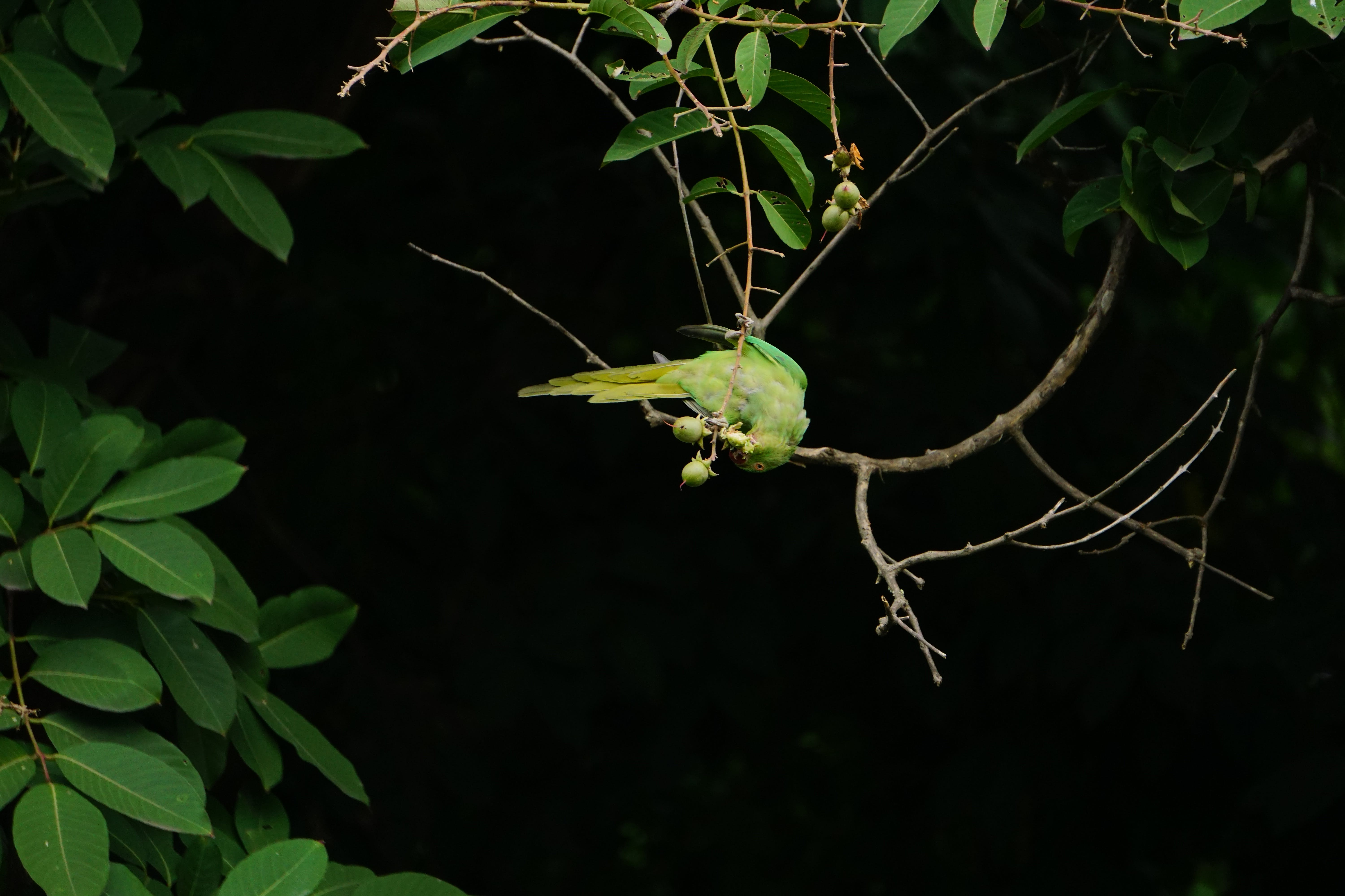Green Bird Perching On Tree