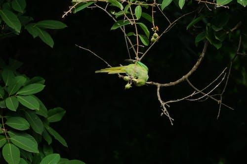 Darmowe zdjęcie z galerii z drzewo, gałąź, siedzący na gałęzi, zwierzę