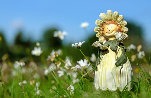White Daisy Flower Field With Plush Toy during Daytime