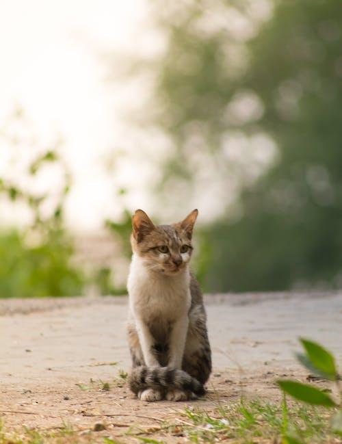 Ingyenes stockfotó # d5200, #cats, #nikon témában