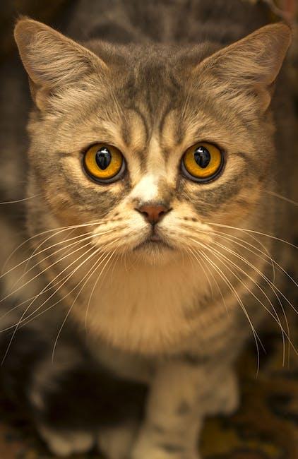 Cute Brown Tabby Cat Close Up Photo