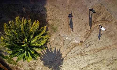 Aerial Photography of Green Palm Tree