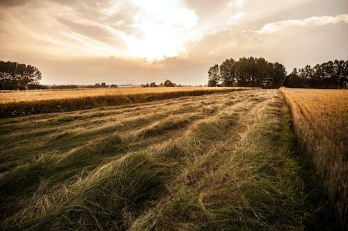 Kostnadsfri bild av fält, Italien, Land, landskap