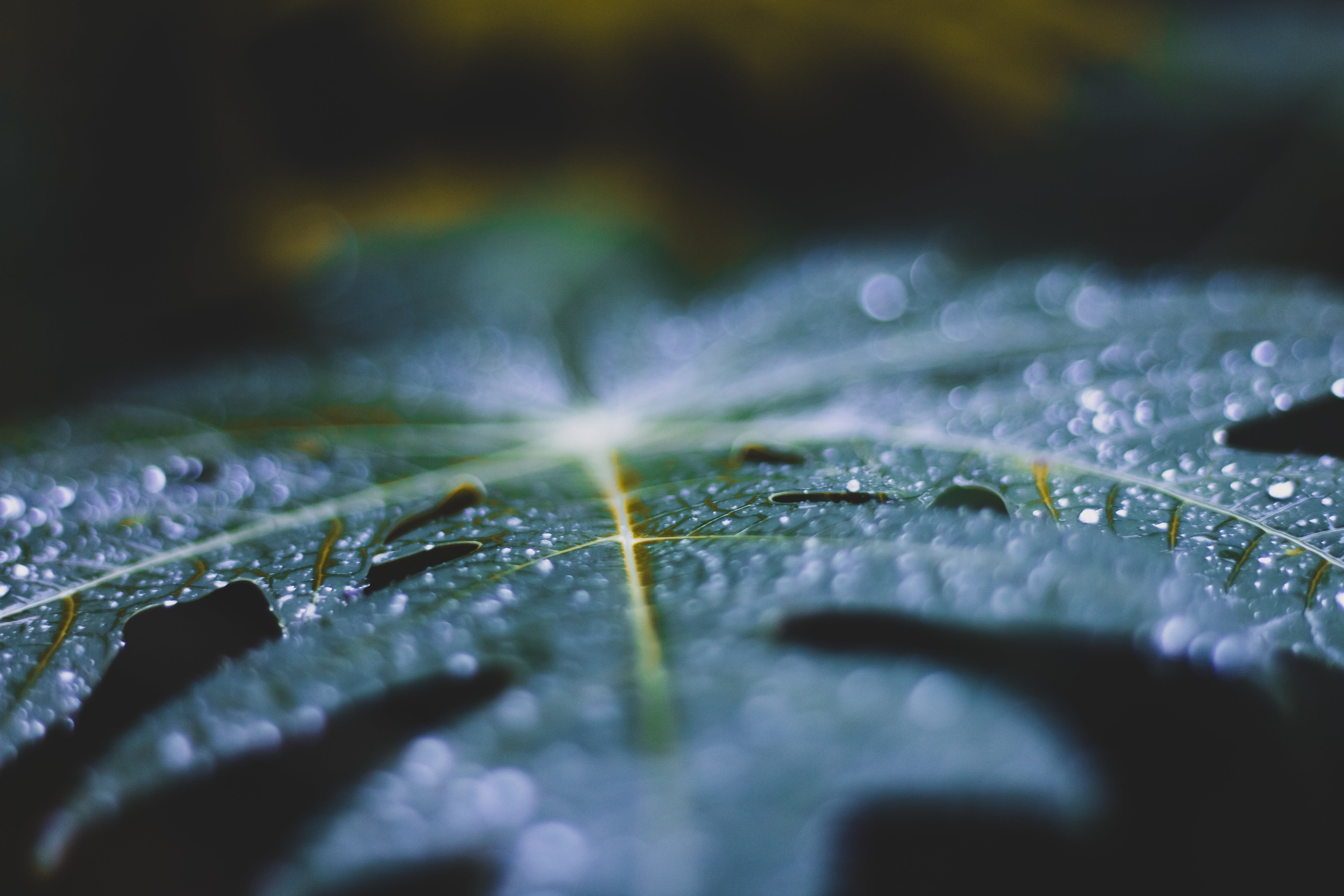 Close-Up Photo of Leaf With Droplets
