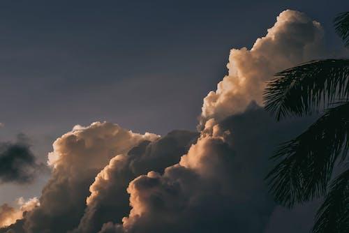 天性, 天空, 日光, 棕櫚樹葉 的 免费素材照片