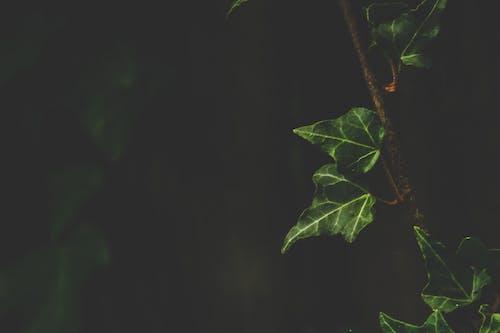 Ảnh lưu trữ miễn phí về cận cảnh, màu sắc, màu xanh lá, môi trường