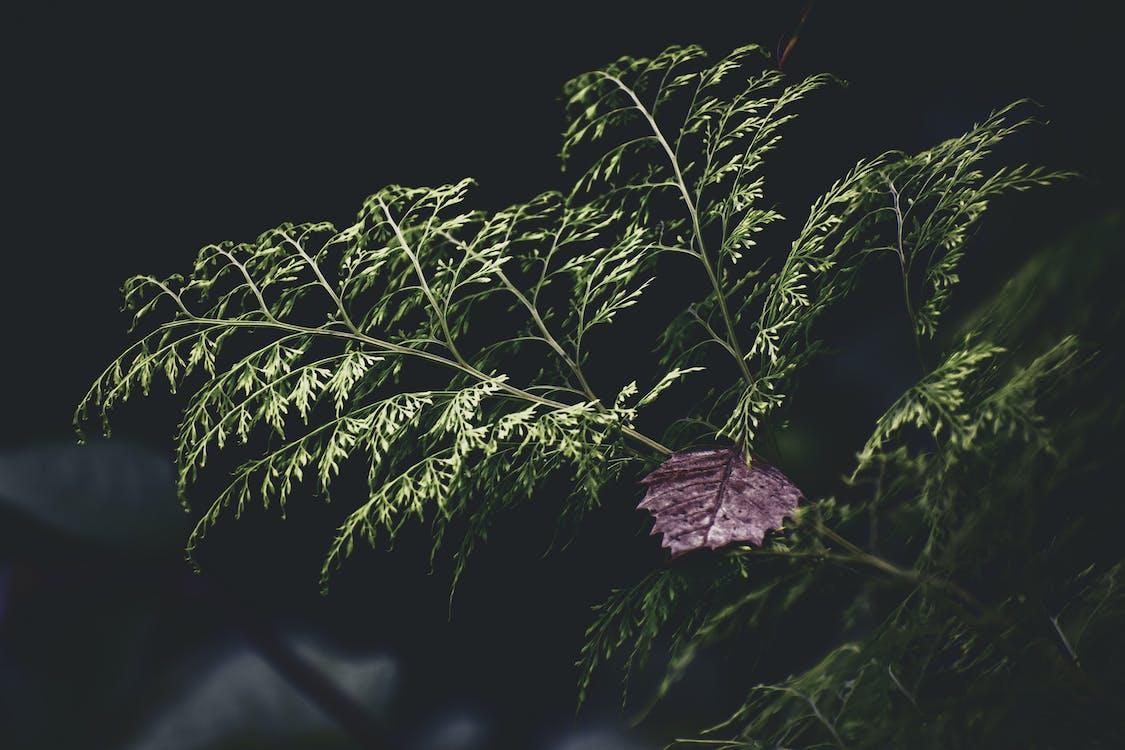 aumento, botânico, close