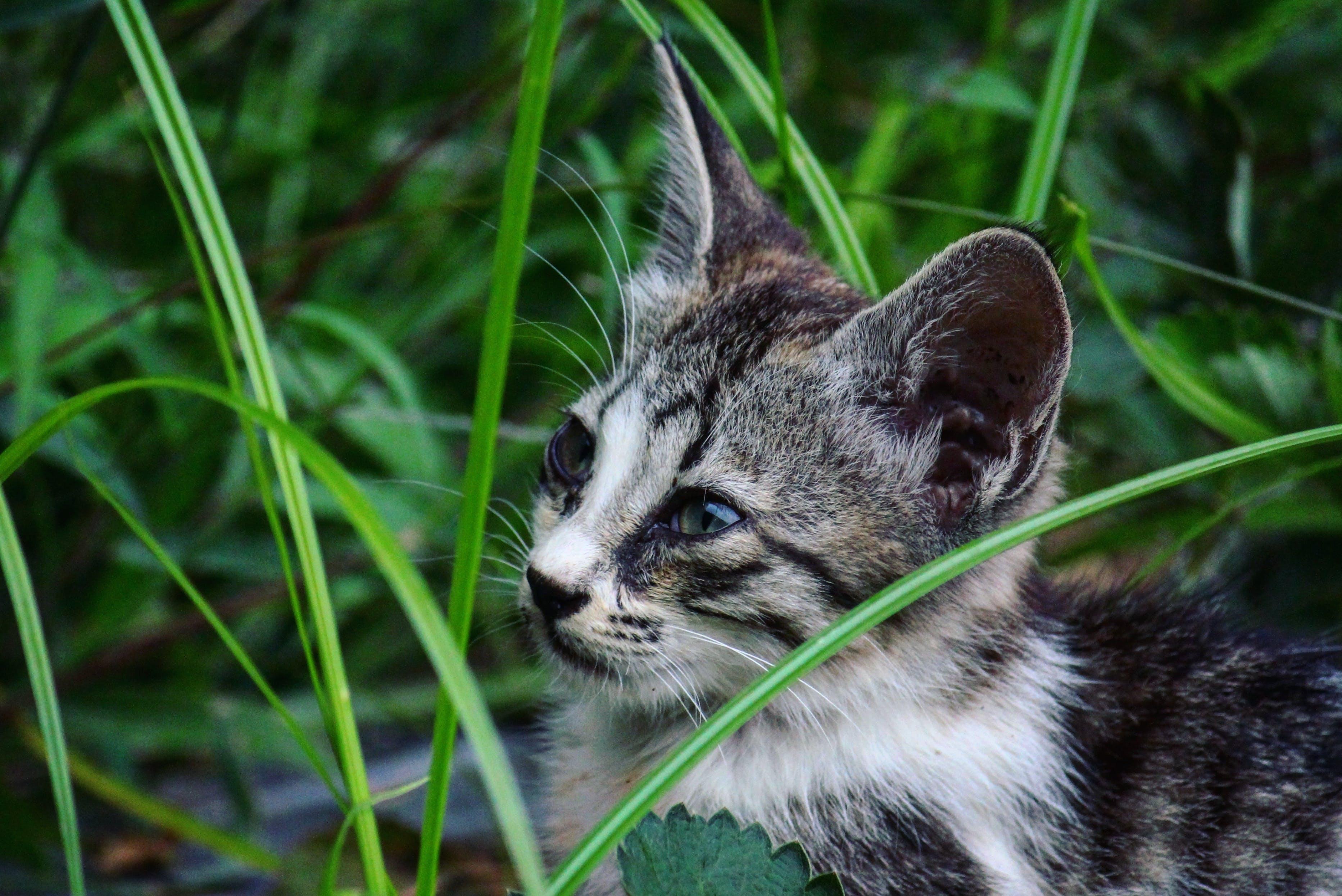 Gratis lagerfoto af close-up, dyr, dyreliv, græs