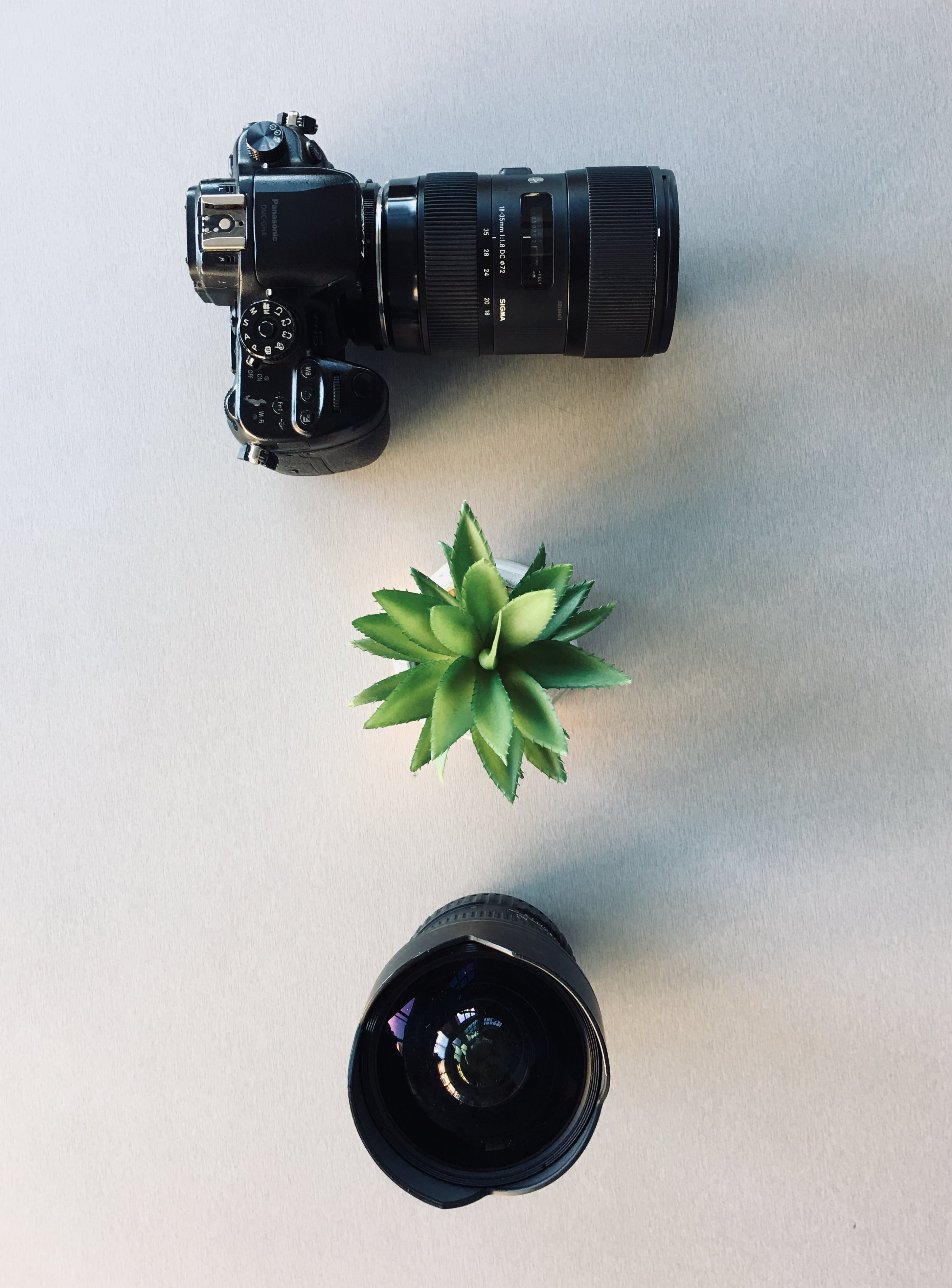 Camera and Succulent Plant