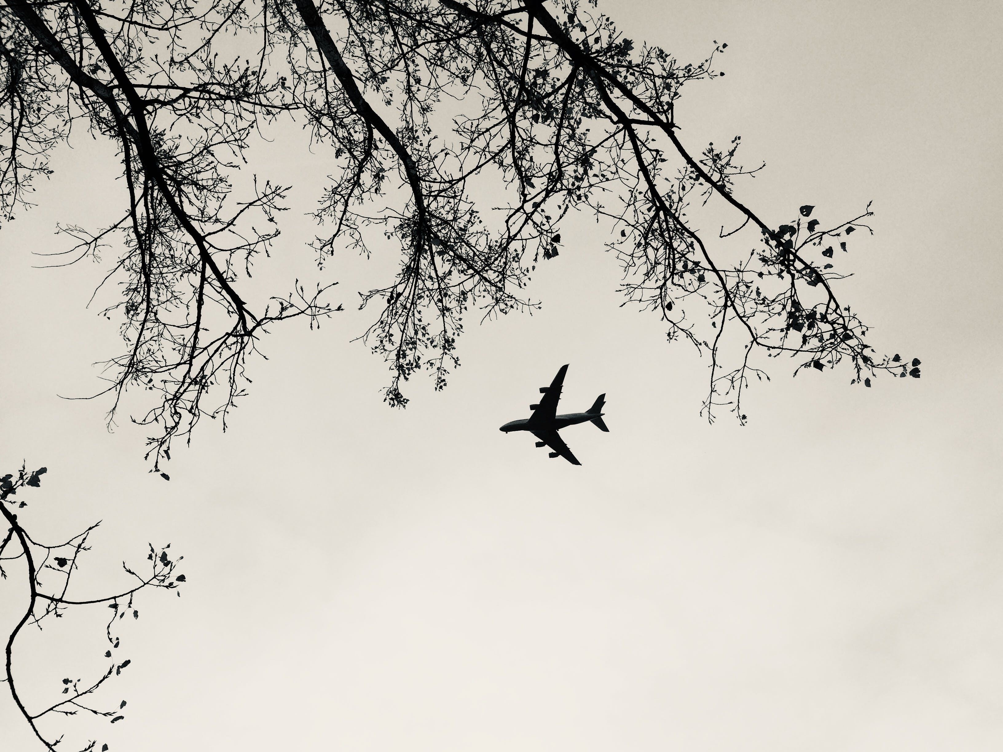Free stock photo of airplane, black and white
