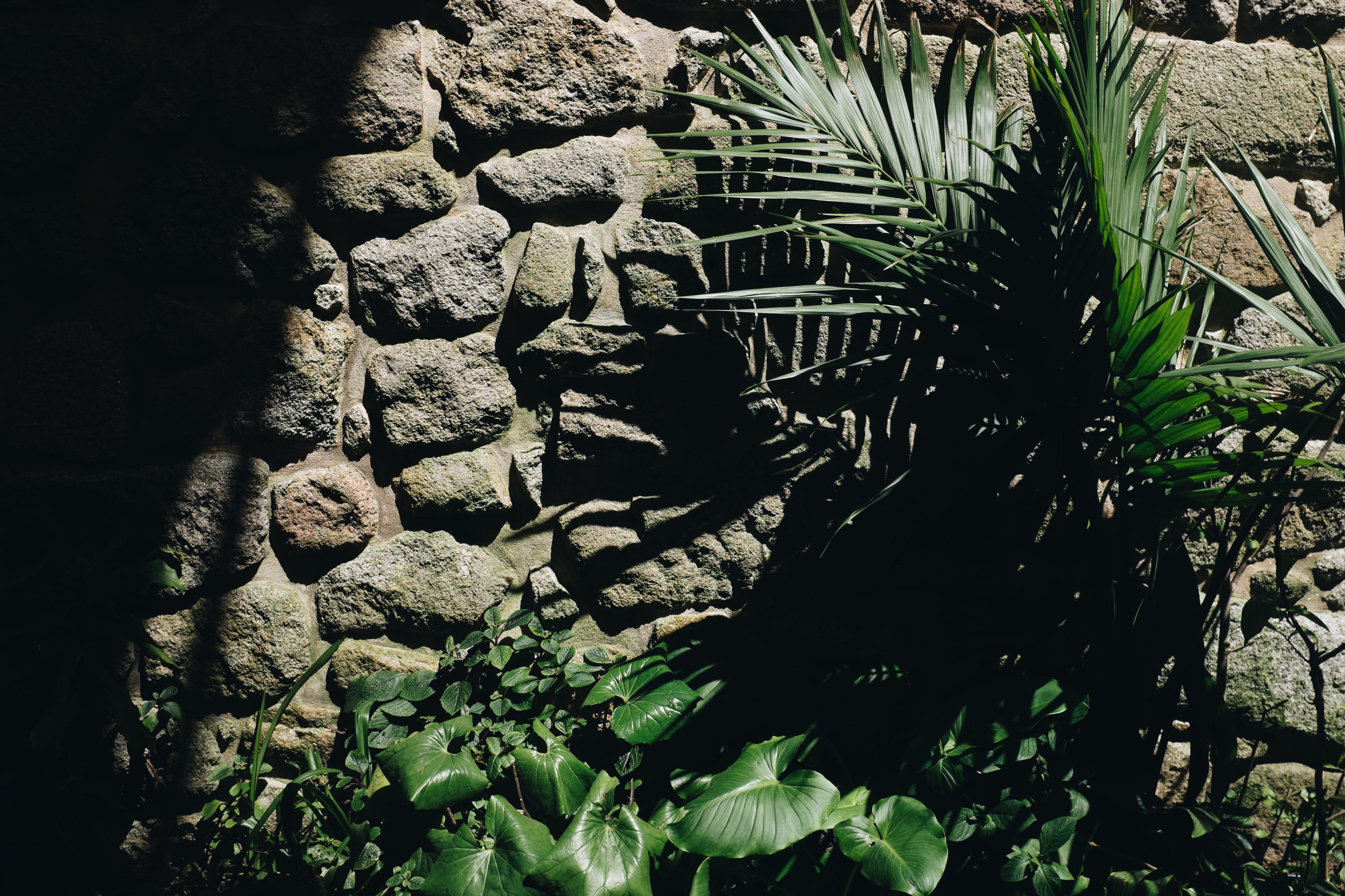 คลังภาพถ่ายฟรี ของ พืช, สวน, หิน