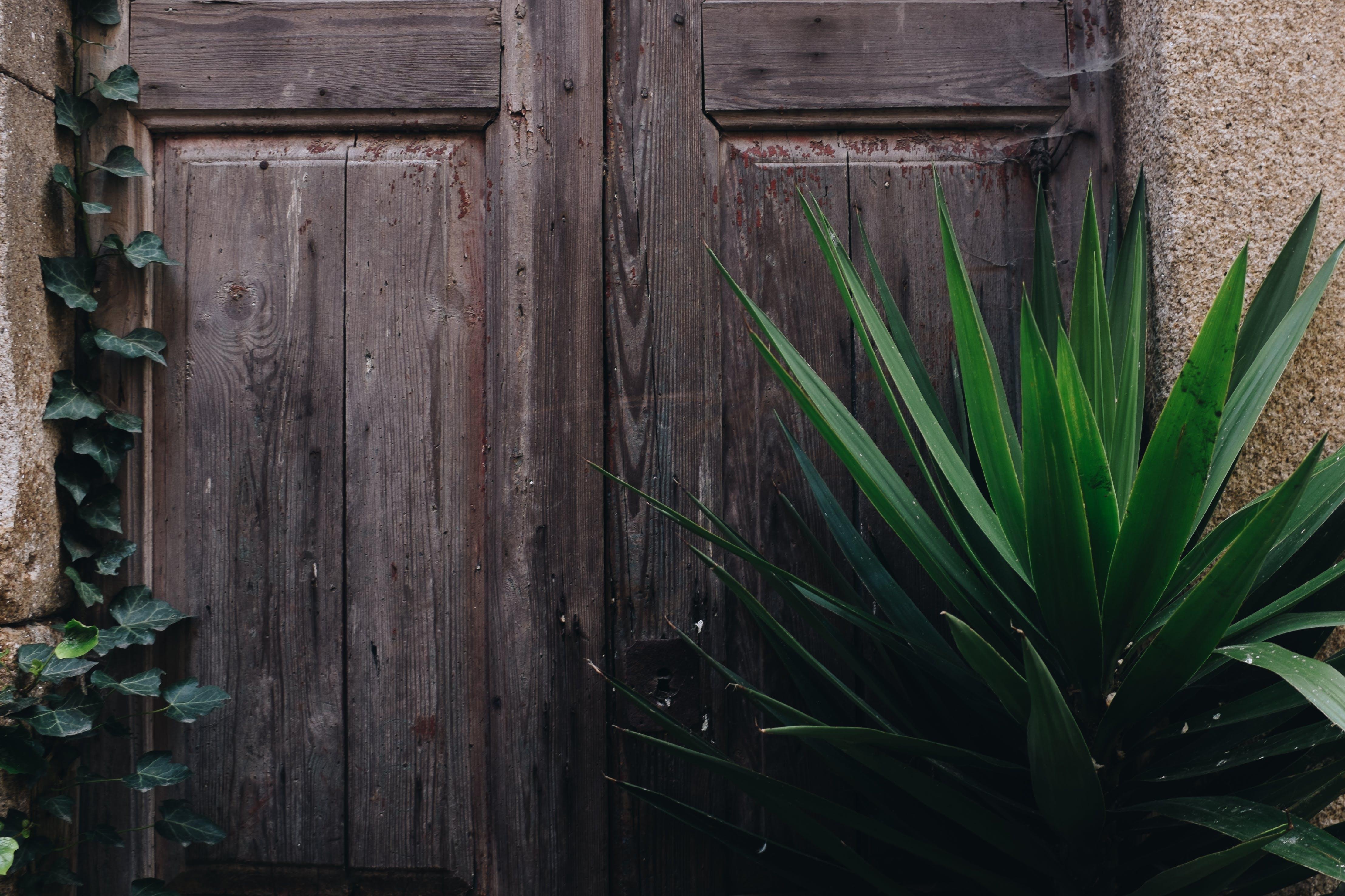 Foto stok gratis dinding, eksterior, hijau, kayu
