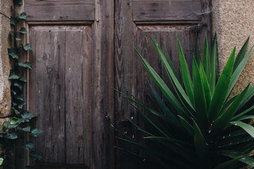 Foto d'estoc gratuïta de de fusta, exterior, fusta, mur
