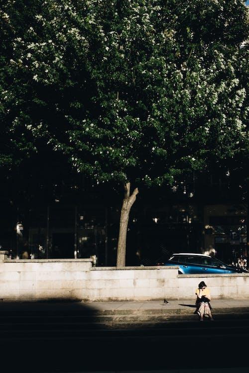 Photos gratuites de arbre, chaussée, être assis, femme