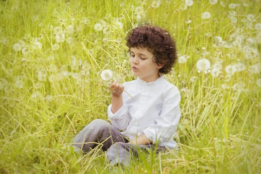 Girl Wearing White Long Sleeve Top Holding White Dandelion Flower during Daytime