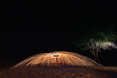 Безкоштовне стокове фото на тему «вечір, гарячий, дерево, краєвид»
