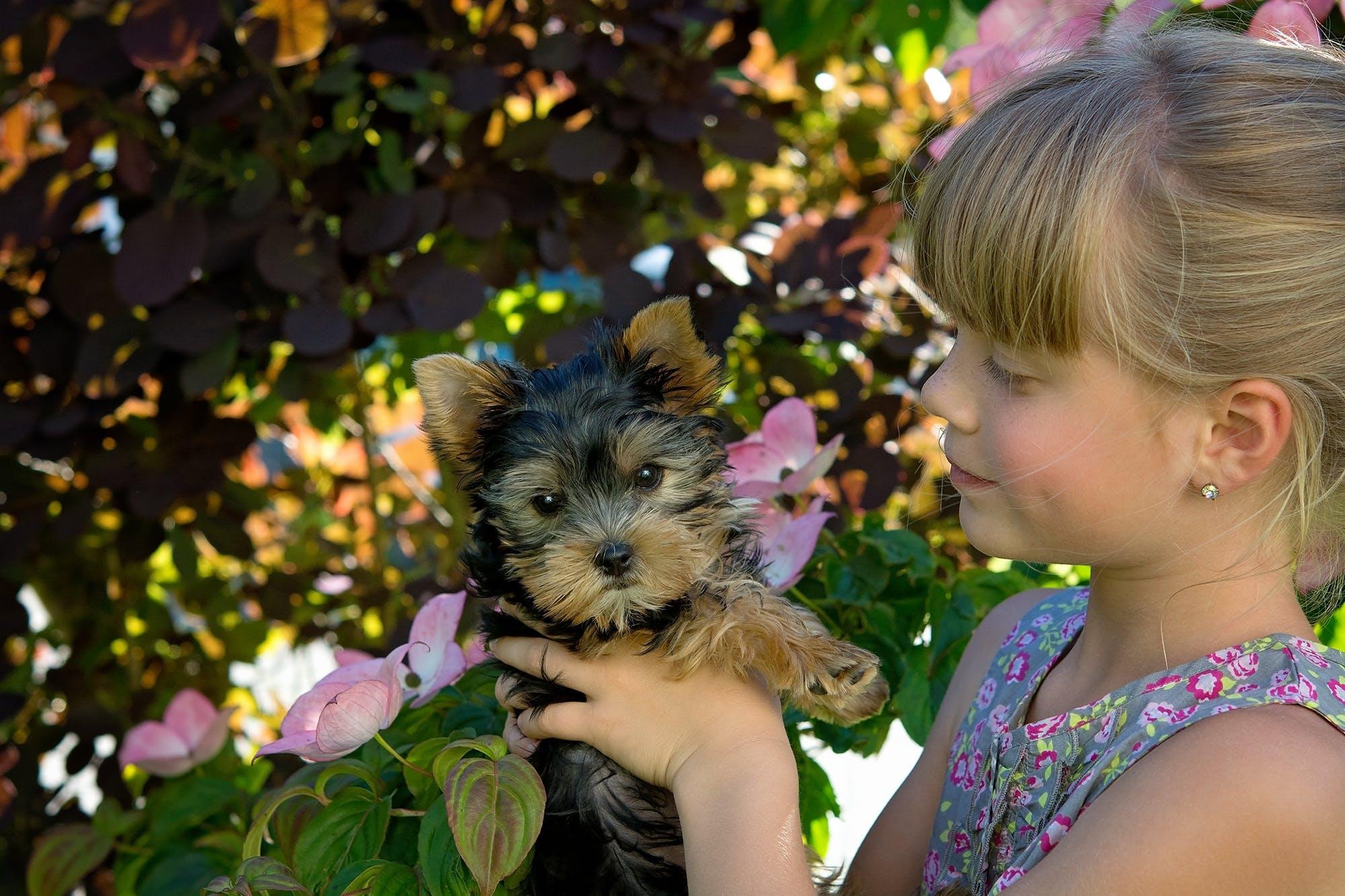 Gratis stockfoto met aanbiddelijk, babyhondje, blijdschap, bloemen