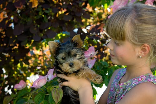 Girl Holding Black and Brown Short Coated Dog