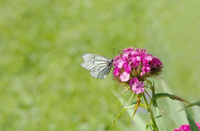 คลังภาพถ่ายฟรี ของ กลีบดอก, ดอกไม้, ผีเสื้อ, พฤกษา