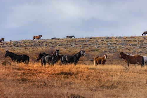 天性, 山, 自然生活, 野生動物 的 免费素材照片