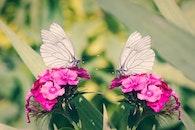 nature, flowers, petals