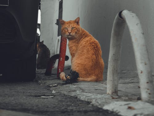 動物, 動物攝影, 小貓, 攝影師 的 免費圖庫相片