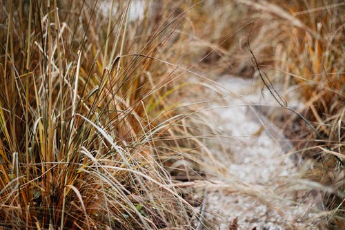 Selective Focus Photography of Brown Grass