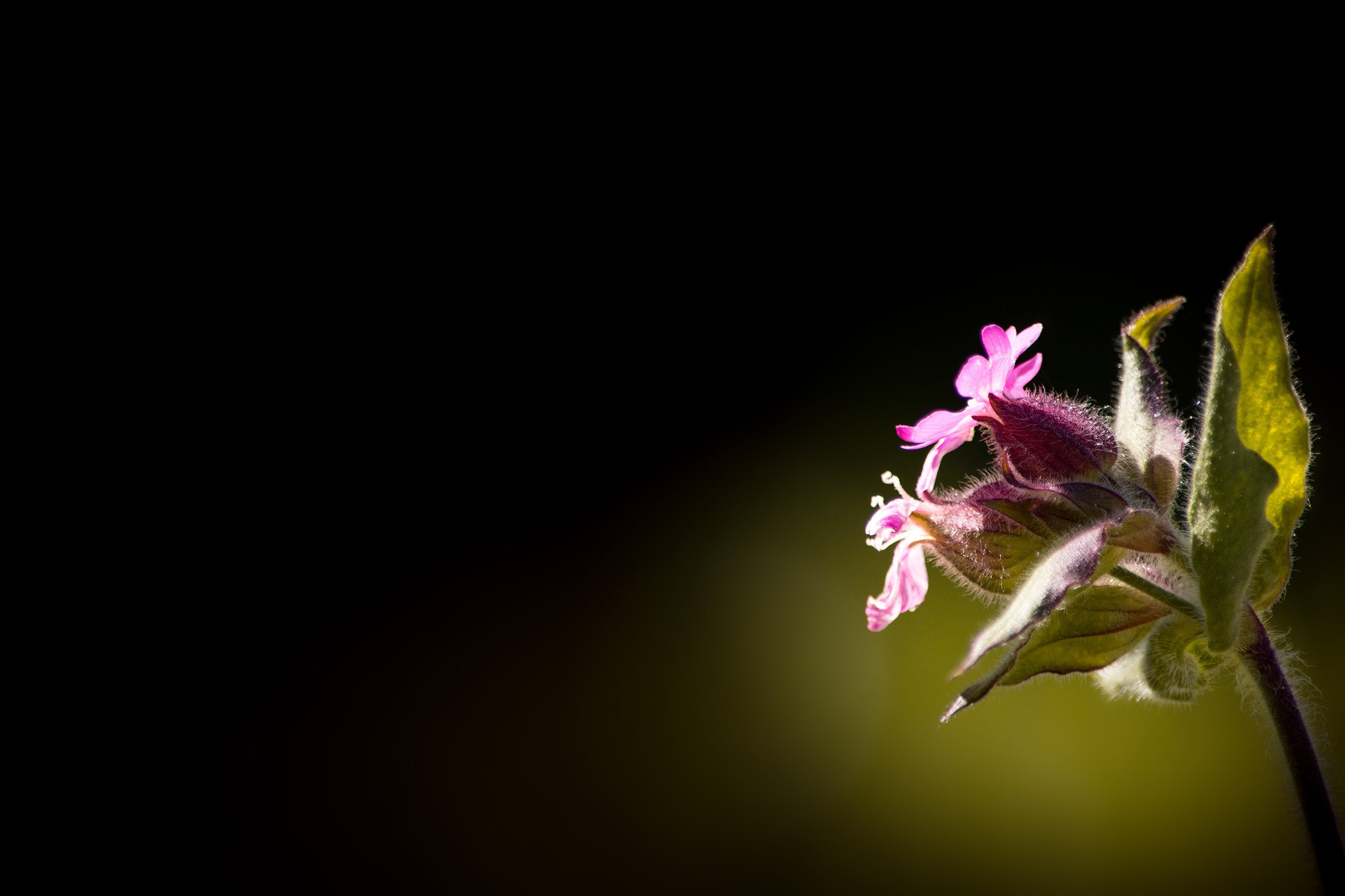 Low Pink Petal Flower With Green Leaves