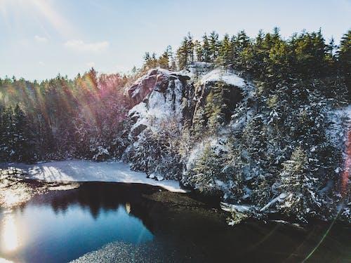 Ingyenes stockfotó erdő, fák, festői, hideg témában