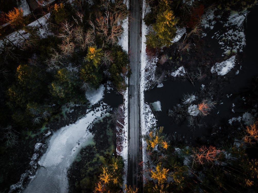 bắn từ trên không, cây, đường