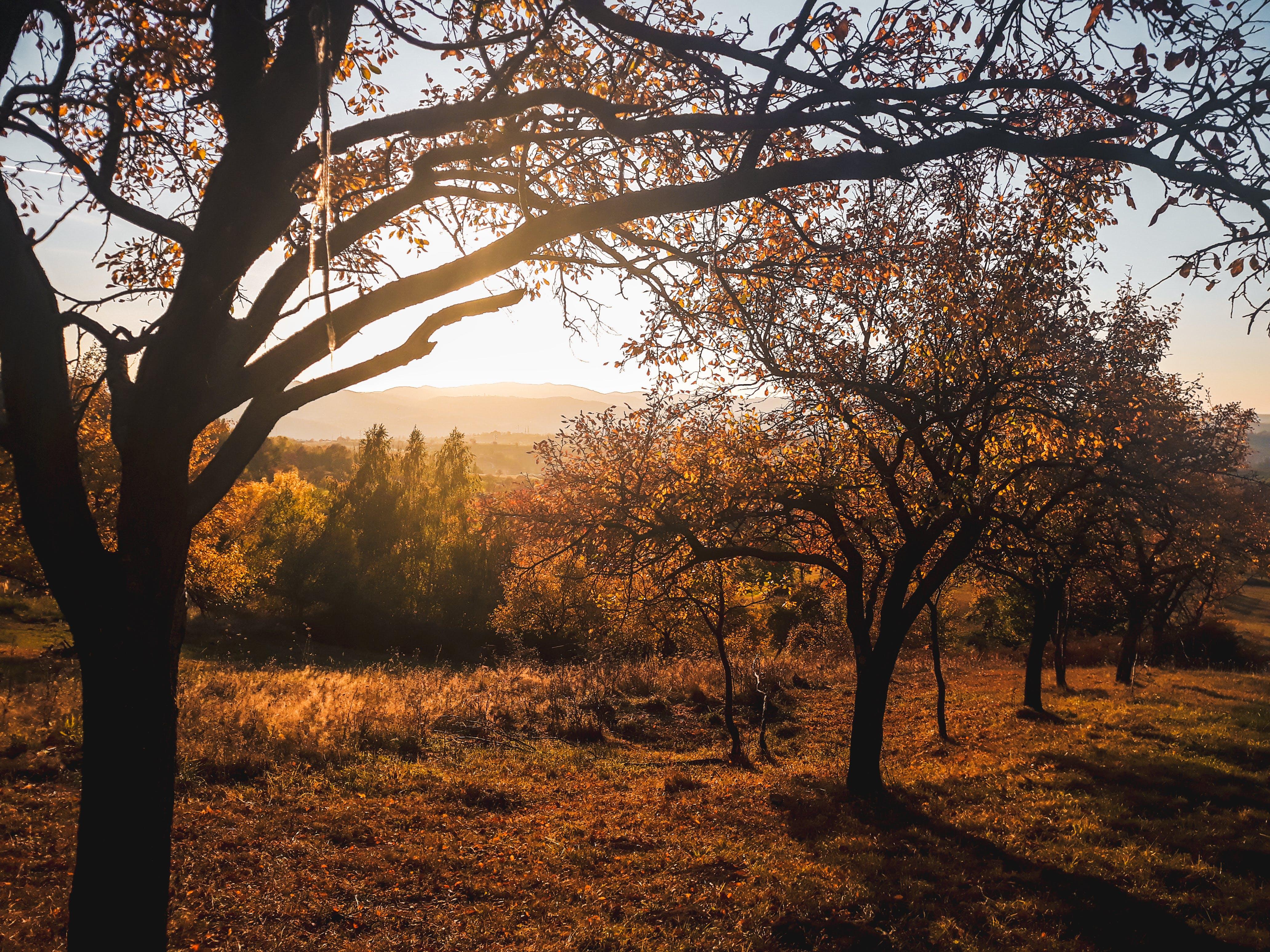 Kostenloses Stock Foto zu äste, bäume, dämmerung, gold