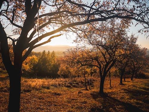 Ảnh lưu trữ miễn phí về ánh sáng, bình minh, cây, chi nhánh