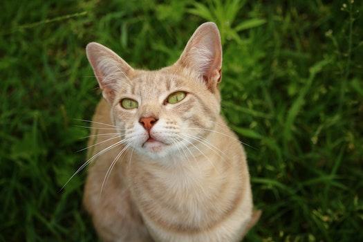 Free stock photo of kitten, cat, smile, mackerel