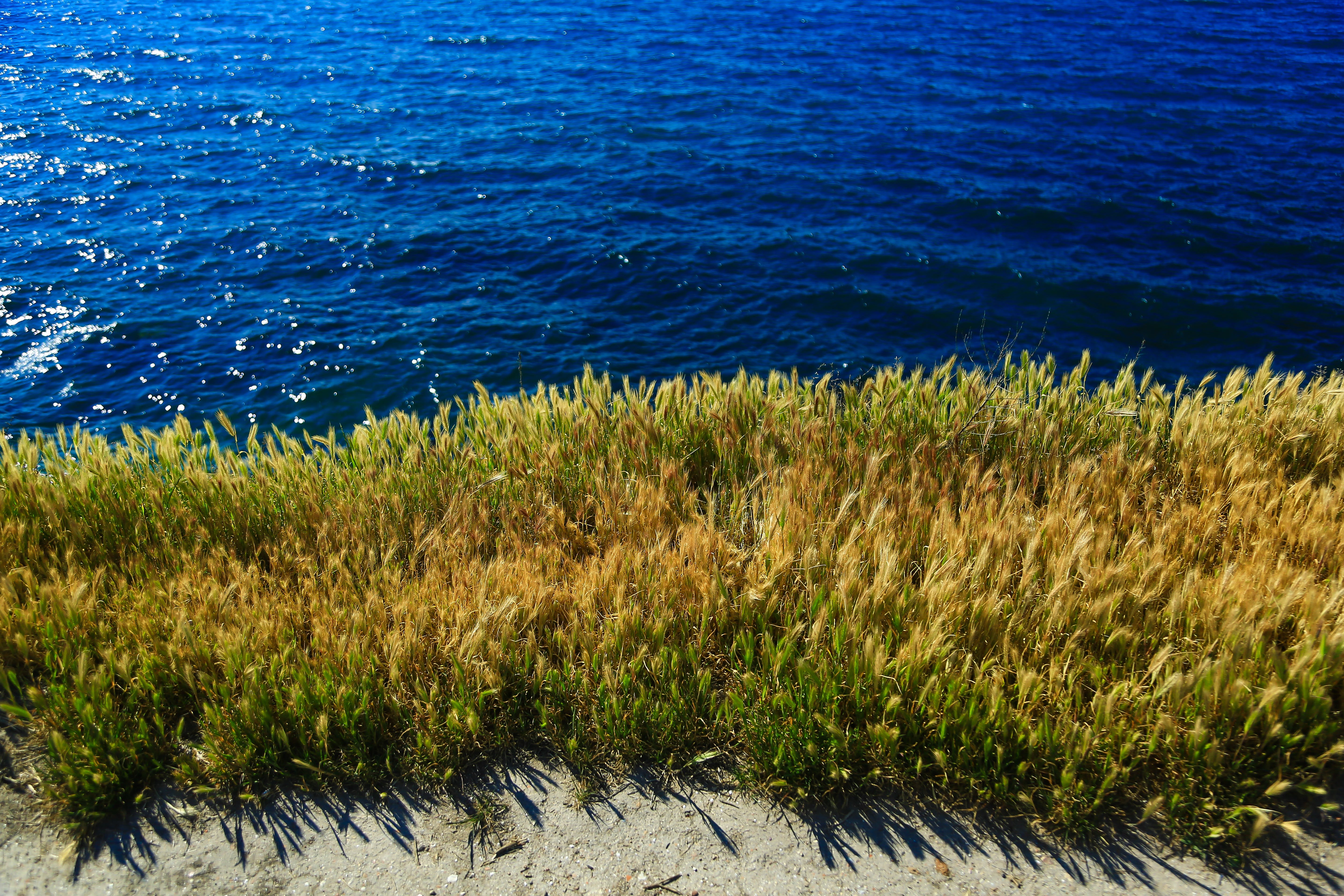 Yellow and Green Grass Beside Body of Water