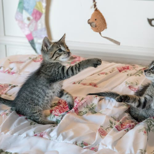 tabby kittens on floral comforter