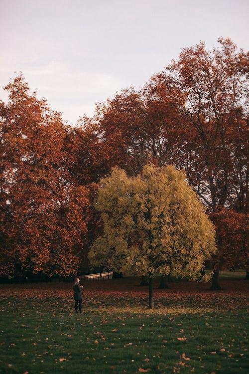 ağaçlar, çevre, gün doğumu, kişi içeren Ücretsiz stok fotoğraf